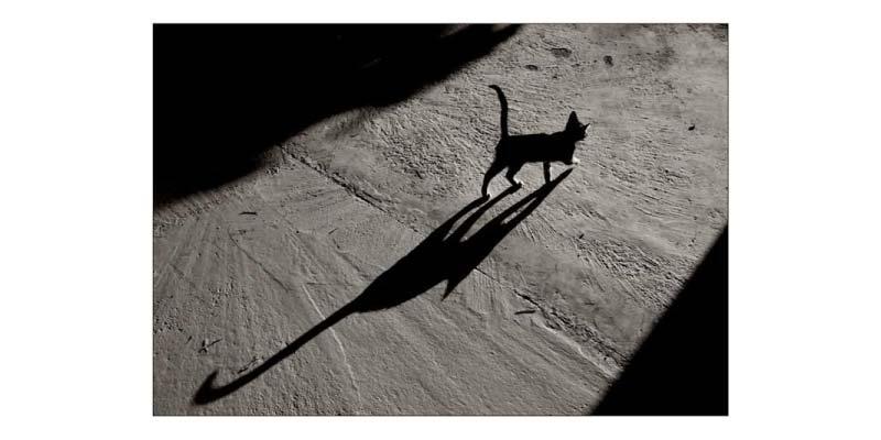 Sfrutta le ombre per scattare foto sensazionali